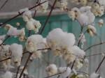 Ждём весну. Автор О. Богачёва