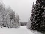 После снегопада. Автор Ю.Рыжова