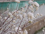 Снежные ягоды. Автор О.Богачёва